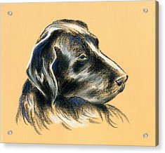 Acrylic Print featuring the pastel Labrador Retriever - Black Dog Pastel Drawing by MM Anderson