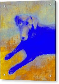 Labrador Retriever In Blue And Yellow Acrylic Print by Ann Powell