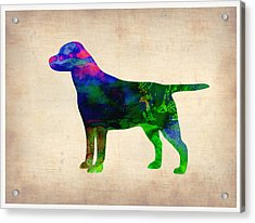 Labrador Retriever Watercolor 2 Acrylic Print by Naxart Studio