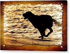 Labrador Silhouette Acrylic Print by Eleanor Abramson