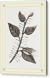 Lace-winged Fly And Eggs On Lilac Acrylic Print by Litz Collection