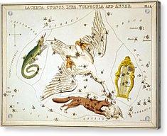 Lacerta Cygnus Lyra Vulpecula And Anser Acrylic Print