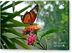Lacewing Butterfly Acrylic Print by Karen Adams