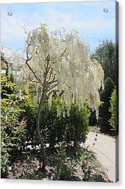 Lacework Acrylic Print by Dody Rogers