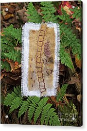 Ladder And Ferns Acrylic Print by Linda Marcille