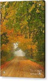 Low Autumn Tunnel Acrylic Print by Terri Gostola