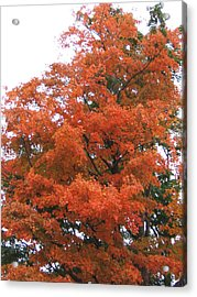 Lady Autumn - Tree Acrylic Print by Margaret McDermott