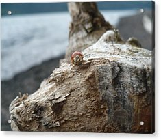 Lady Bug A Drift Acrylic Print by Nicki Bennett