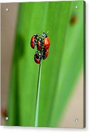 Lady Bug Social Acrylic Print