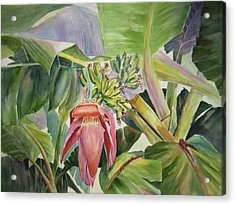 Acrylic Print featuring the painting Lady Fingers - Banana Tree by Roxanne Tobaison