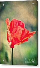 Lady In Red Acrylic Print by Angela Doelling AD DESIGN Photo and PhotoArt