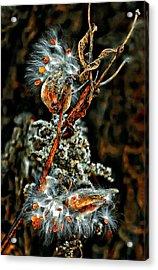 Lady Of The Dance Acrylic Print by Steve Harrington