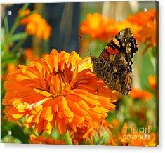 Lady On Orange Acrylic Print by Heidi Manly