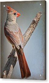 Lady Redbird Acrylic Print by Bonnie Barry