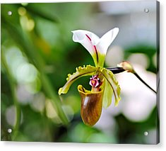 Lady Slipper Acrylic Print by Katherine White