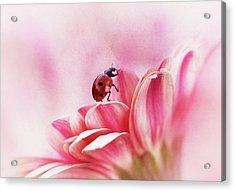 Ladybird On Gerbera Acrylic Print