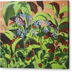 Ladybirds Acrylic Print by Andrew Macara