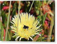 Ladybug And A Bumblebee Acrylic Print
