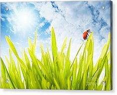 Ladybug Acrylic Print by Boon Mee