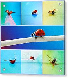 Ladybug Collage Acrylic Print