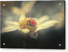 Ladybug Dream Acrylic Print by Taylan Apukovska