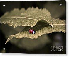 Ladybug Acrylic Print by Nora Blansett