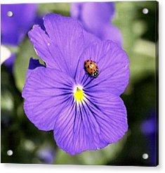 Ladybug On Flower Acrylic Print