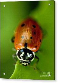 Ladybug On Green Acrylic Print by Iris Richardson