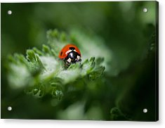 Ladybug On The Move Acrylic Print