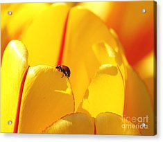 Ladybug - The Journey Acrylic Print