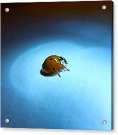 Ladybug Under Blue Light Acrylic Print