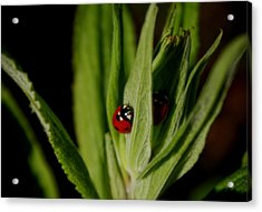 Acrylic Print featuring the photograph Ladybugs by Adria Trail