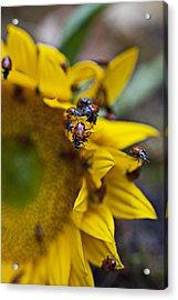 Ladybugs Close Up Acrylic Print by Garry Gay