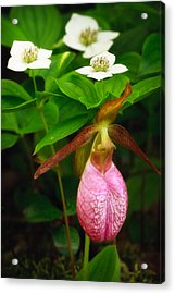Ladys Slipper And Bunchberry Acrylic Print