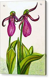 Lady's Slipper Acrylic Print