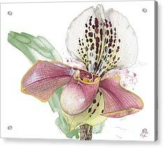 Ladys Slipper - Orchid 14 - Elena Yakubovich Acrylic Print