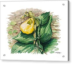 Acrylic Print featuring the painting Ladyslipper by Bob  George