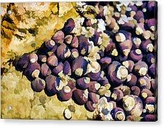 Laguna Beach Tide Pool Pattern 2 Acrylic Print by Scott Campbell