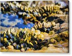Laguna Beach Tide Pool Pattern 4 Acrylic Print by Scott Campbell