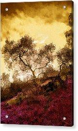 Laguna Canyon Acrylic Print by SM Shahrokni