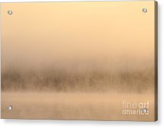 Lake Cassidy With Fog And Trees Along Shoreline Shrouded In Fog Acrylic Print