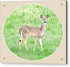 Lake Country Doe   Acrylic Print by Will Borden