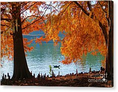 Lake Ella Morning Acrylic Print