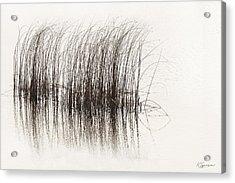 Lake Grasses Acrylic Print