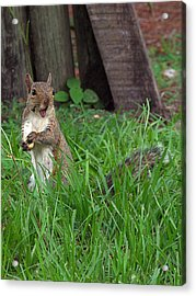 Acrylic Print featuring the photograph Lake Howard Squirrel 000 by Chris Mercer