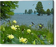 Acrylic Print featuring the photograph Lake Lotus And Swallows by Deborah Smith