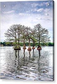 Lake Maitland Cypress Acrylic Print by Anthony Festa