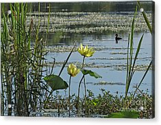 Acrylic Print featuring the photograph Lake Marion Morning by Deborah Smith