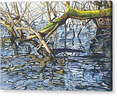 Lake Padden - View From The Memorial Bench Of Christina And Edwin White Acrylic Print by Nick Payne