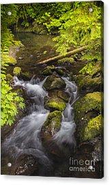 Lake Quinault Creek 2 Acrylic Print by Sonya Lang